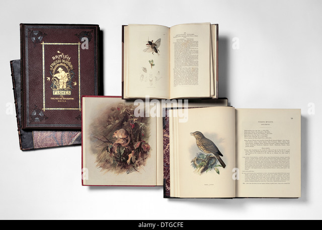 Illustrated books - Stock Image