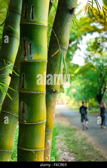 Bamboo Stcik People ~ Tropical jungle burma stock photos