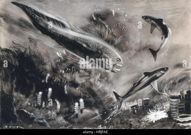 Prehistoric, Devonian Period, Dinichthys herzeri - Stock Image