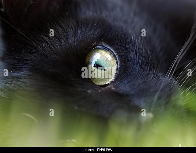 Cats Eye Snail Habitat