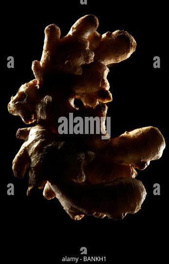 Ginger (Zingiber officinale) backlit on black background - Stock-Bilder