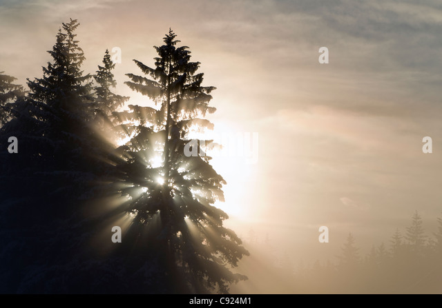 Morning sunrays shine through dense ice fog and trees, Tongass National Forest, Juneau, Southeast Alaska, Winter - Stock Image