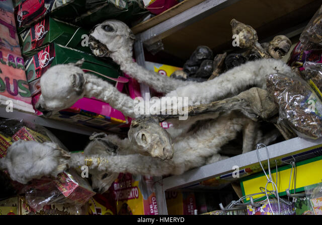 Llamas on display in the Witches Market in La Paz, Bolivia, for use in la mesa, a sacrifice to the pachamama, mother - Stock Image