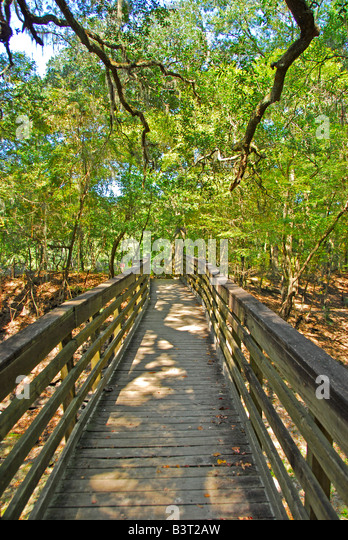 Florida hiking boardwalk Suwannee River Trail hike Suwannee River State Park - Stock Image