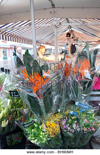Flower stall, cut flowers, Strelitzia, Lilium & Alstroemeria, Marche aux Fleurs, the old city, Nice, France - Stock Image