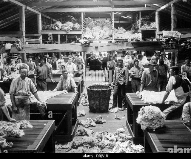 Wool sorting and classing, Burrawang, Australia - Stock Image