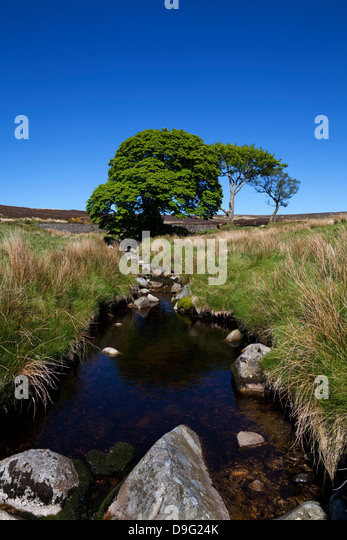 Small group of trees around the upper reaches of the River Liffey, Below East Kippure Mountain, County Wicklow, - Stock Image