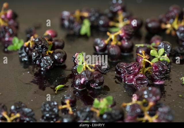 small bunches of black grapes on dark metal tin oven roasted with thyme herbs and balsamic vinegar seasoning - Stock Image
