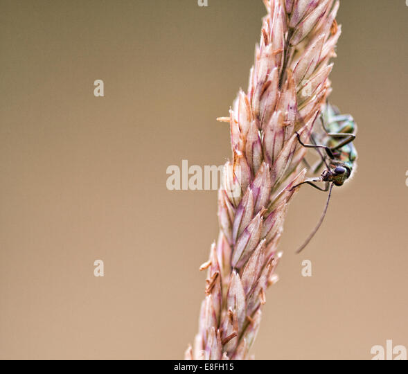 Close-up of insect sitting on plant - Stock-Bilder