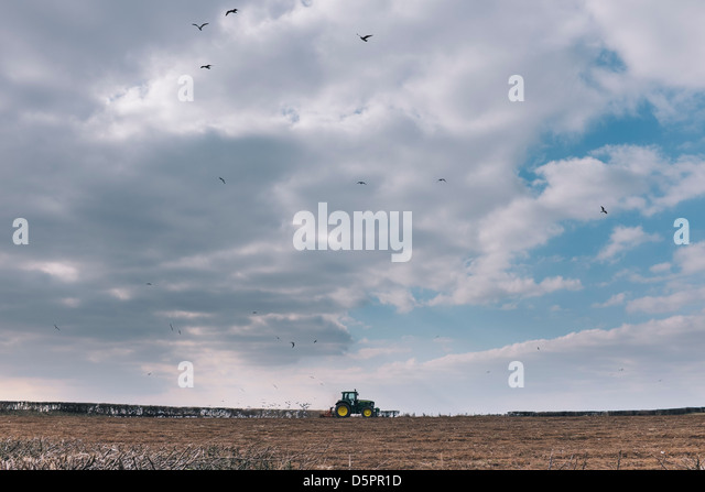 Tractor plowing field with flock of birds following - Stock Image
