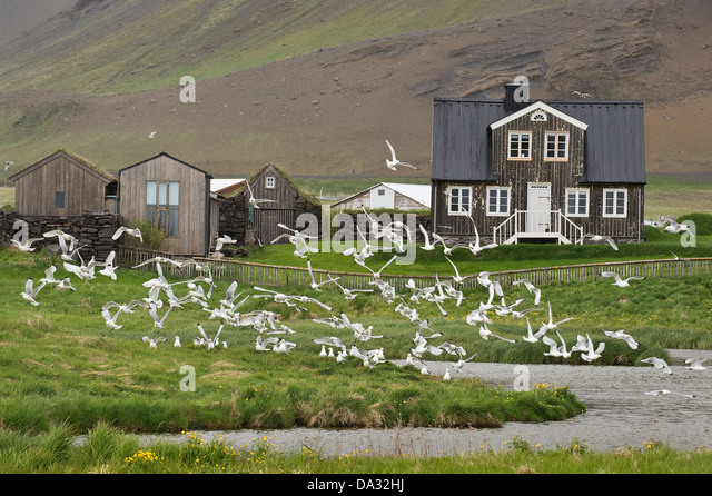House with pond and sea birds in flight Ströndin coastal strip between Stapi and Hellnar Nature Reserve Iceland - Stock Image