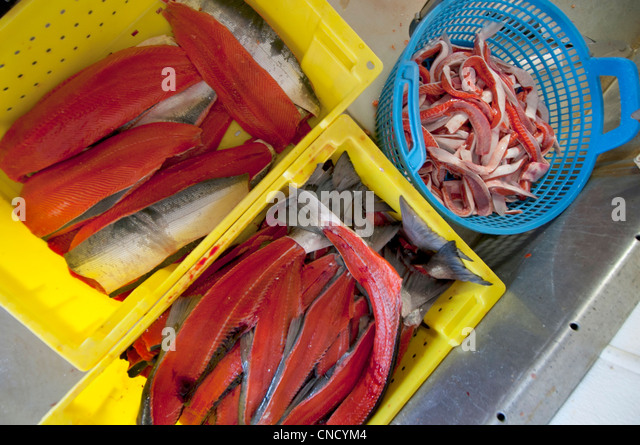 Crates with parts from Sockeye salmon used for various processing at the Naknek Family Fisheries, Bristol Bay, Alaska - Stock Image