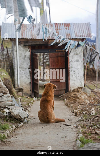 Kingdom of Bhutan, dog sitting in front of gate, - Stock Image