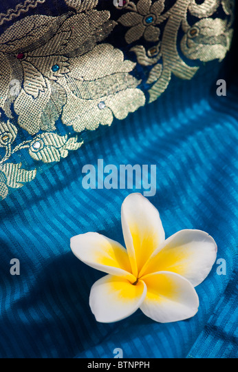 Plumeria. Frangipani flower on indian silk sari - Stock-Bilder