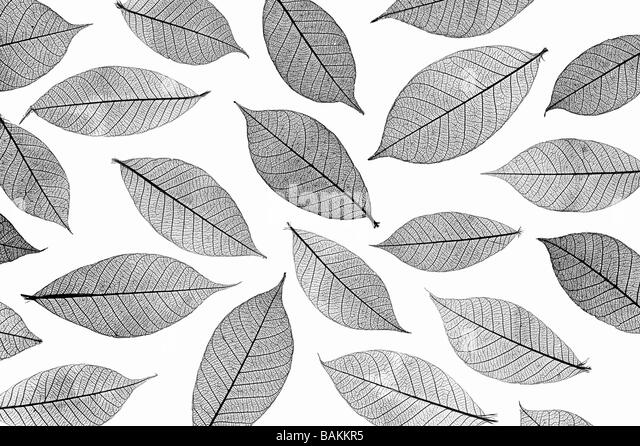 Skeleton leaves pattern. Black and White - Stock Image
