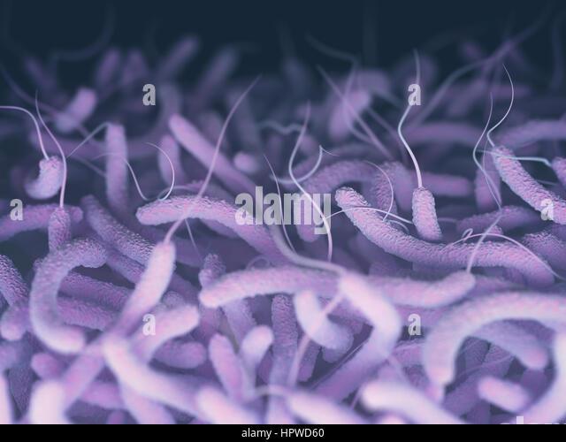 Vibrio cholerae and flagella, illustration. - Stock-Bilder