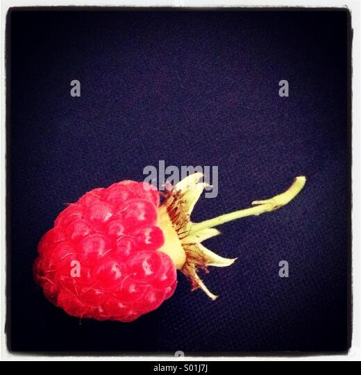 Single fresh raspberry on black background - Stock Image