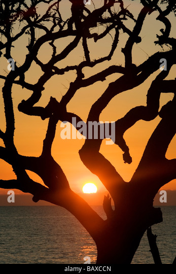 Sunrise from driftwood beach - Jekyll Island, Georgia - Stock Image