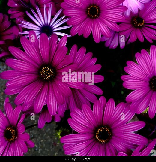 Purple flowers - Stock-Bilder