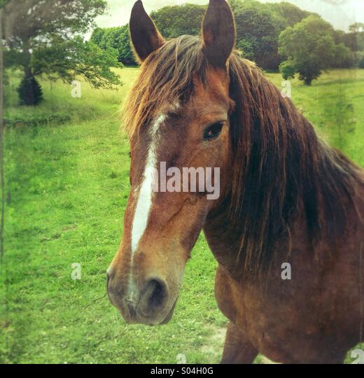 Horse in field in countryside - Stock Image