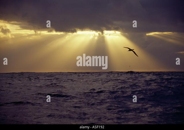 Albatross soaring over open ocean Southern Ocean Sunbeams sunrays crepuscular rays Godbeams Ropes of Maui - Stock Image