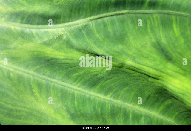 Green leafy texture for backgrounds or wallpaper. - Stock-Bilder