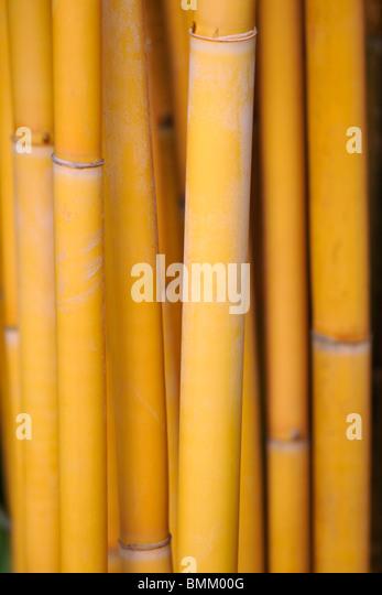 Close up of bamboo stalks - Stock-Bilder