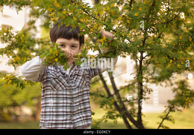 Young boy (4-5) hiding behind tree - Stock Image
