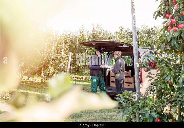 Farmer and customer at back of van in apple orchard - Stock-Bilder