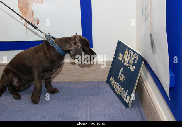 A brown spaniel on a lead appears to read a book about misogyny called an abc for misogynists at an art exhibition - Stock Image