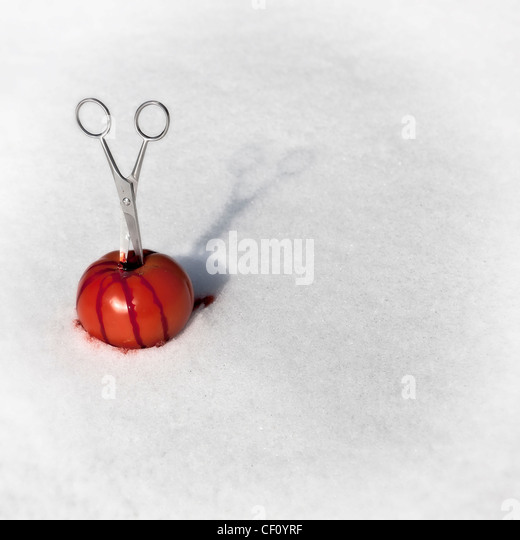 Scissor stuck in a bloody tomato in the snow - Stock Image