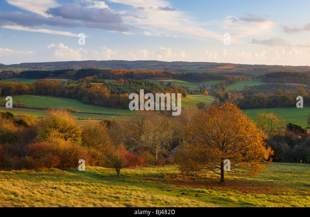 View from Newlands Corner looking toward Albury, North Downs Way Surrey. The warm light of the sun highlighting - Stock Image