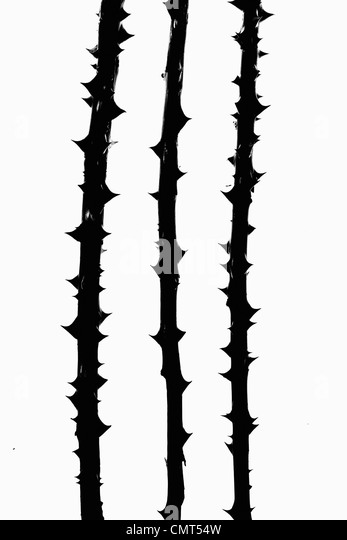 Black thorns on stalks - Stock Image
