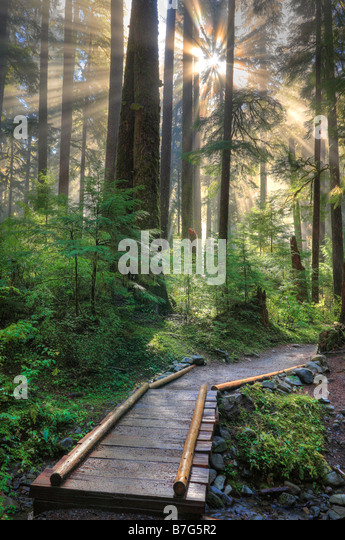 Forest at Sol Duc Falls in Olympic National Park, Washington - Stock Image