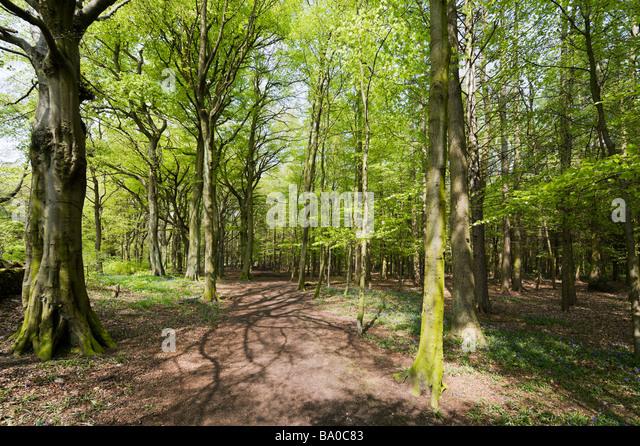 Garden Landscaping In Halifax Huddersfield West: Landscape Of Huddersfield Stock Photos & Landscape Of