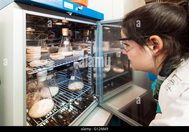 Researcher inspect fungus cultures in the mycology room. - Stock-Bilder