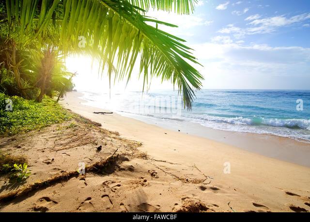 Sandy beach with green palm trees near ocean - Stock Image