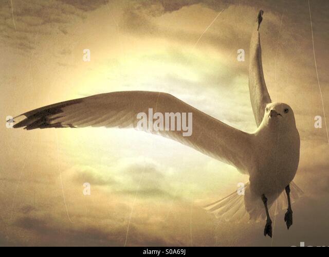 Seagull Flying in the Sky - Stock Image