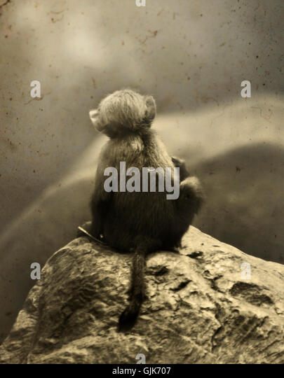 back view of the small cute sitting monkey observing nature - Stock Image
