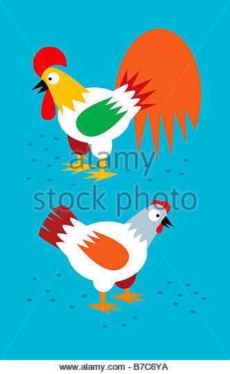 Rooster And Hen - Stock Image