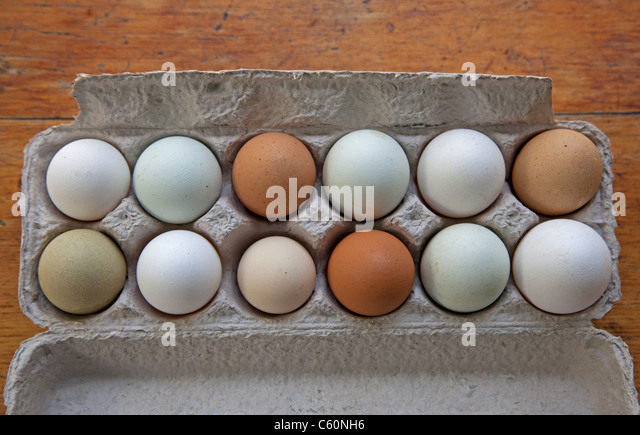 a dozen handpicked farm fresh organic eggs of different colors - Stock Image