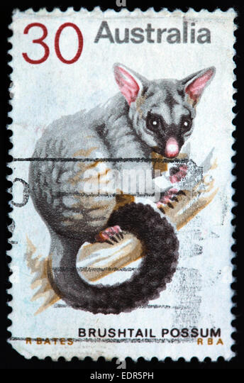Used and postmarked Australia / Austrailian Stamp 30c Brushtail Possum RBA R Bates - Stock Image