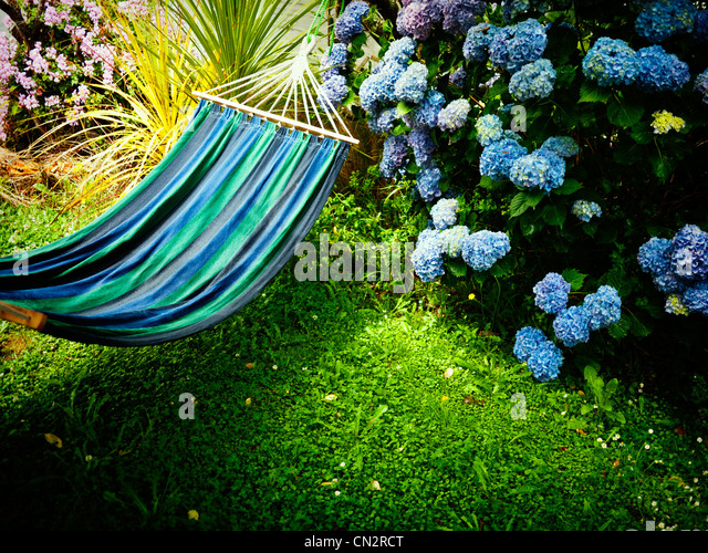 Summer in New Zealand: blue hammock, lawn and hydrangea. - Stock Image