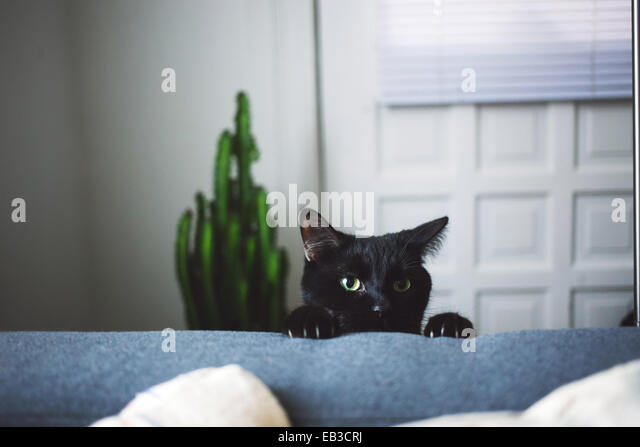 Black cat in living room peeking over arm rest of sofa - Stock Image