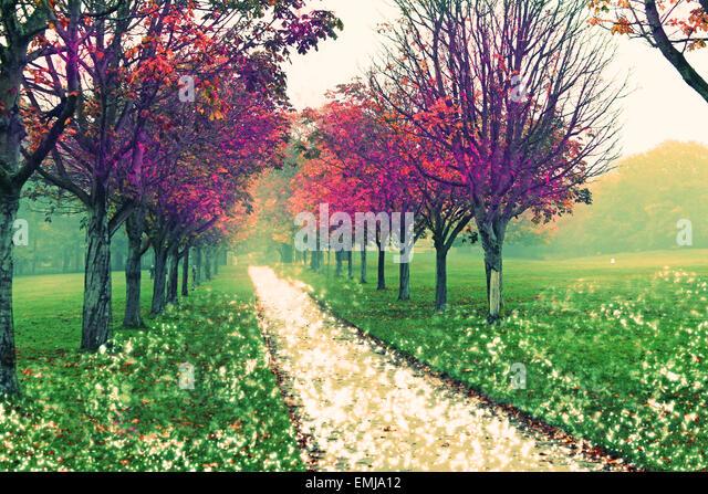 fantasy, fairytale, trees, unrealistic, fiction, fictional, leaves, autumn, story, path, snow, fog, landscape, beauty, - Stock Image