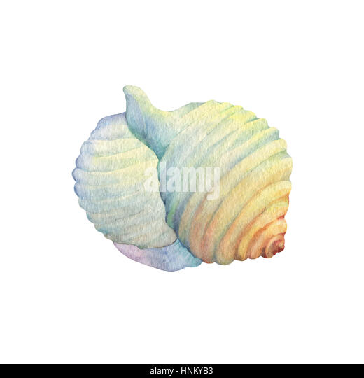 how to draw a clam