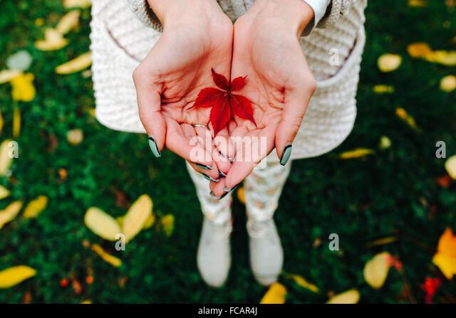 Autumn leaves in girl hands - Stock-Bilder