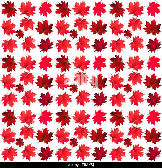 pattern of red maple leaves - Stock Image