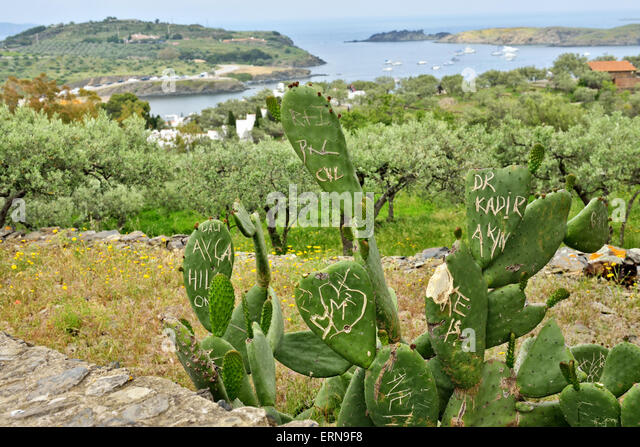 Vandals tourists damaged cactus on tourist pathway in Spain - Stock Image
