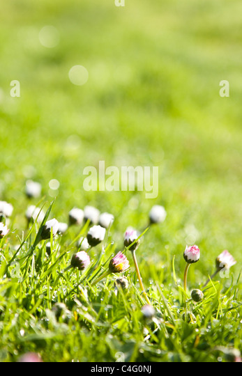 fresh grass with dew drops - Stock-Bilder